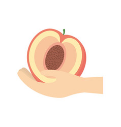 hand holding peach fruit vector image