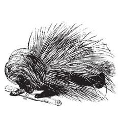 Porcupine vintage vector