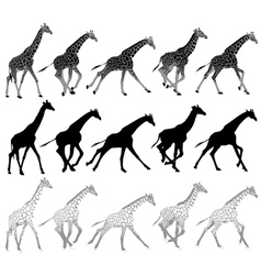 running and walking giraffes vector image