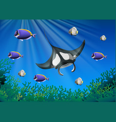 Stingray and many fish under the ocean vector
