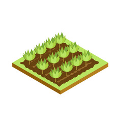seedlings on bed isometric 3d icon vector image