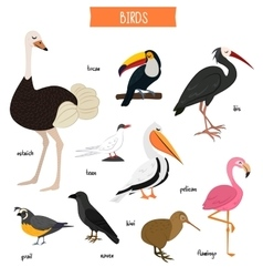 Bird set isolated vector image
