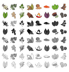 herb and spices set icons in cartoon style big vector image