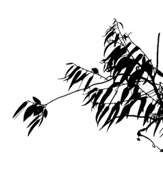 Eucalyptus tree silhouette vector image vector image