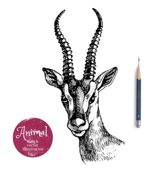 Hand drawn antelope portrait animal sketch vector