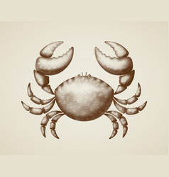 Crab painted in engraving style vector