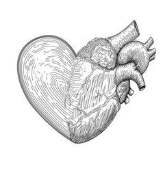Heart symbol with half real human heart together vector