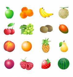 Calorie table fruits vector