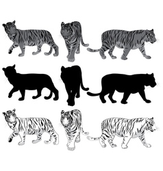 Walking tigers vector