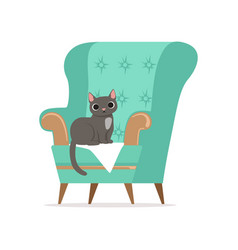 Cute gray cat sitting on a turquoise armchair vector