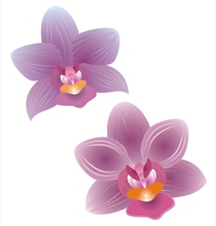 Orchid vs vector