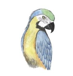 Parrot watercolor bird vector