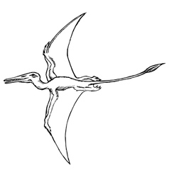 pterodactyl vector image vector image