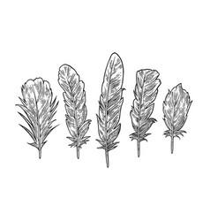 set feathers vintage black engraving vector image vector image