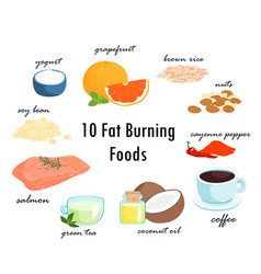 Top ten fat burning fat foods vector