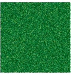 Abstract texture with green lawn grass for vector