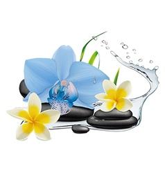 Plumeria orchid flowers water splash and zen sto vector