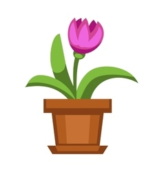 Home flowers in pot vector