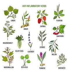 anti-inflammatory herbs hand drawn set of vector image