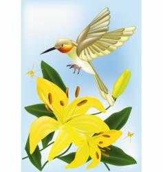 The humming-bird and lilies vector