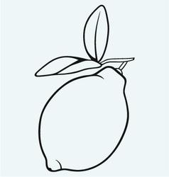 Fresh lemon vector image