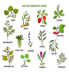 Anti-inflammatory herbs hand drawn set of vector