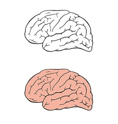 Human brain side view vector