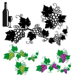 grapes with vine leaves vector image vector image