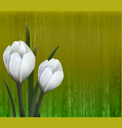 Floral background spring flowers crocus vector
