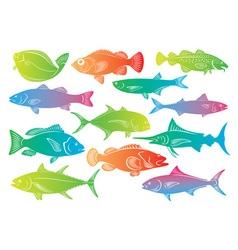 Marine fish vector