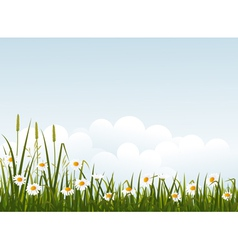 Wild flower meadow vector
