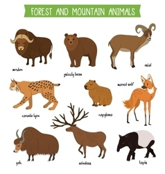 Forest and mountain animals isolated set vector image