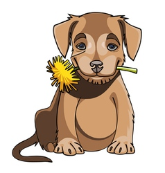cartoon cute puppy holding a dandelion in mouth vector image vector image