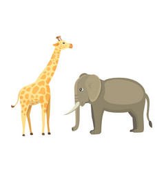 giraffe and elephant cartoon african vector image