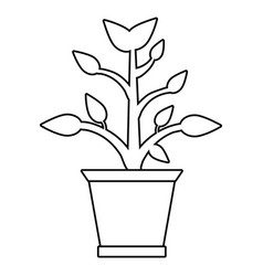 pot plant garden thin line vector image