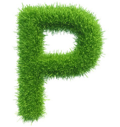 Capital letter p from grass on white vector
