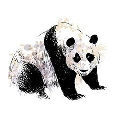 Colored Hand drawing panda vector image vector image