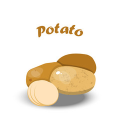 Fresh potato vector