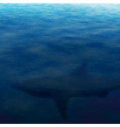 Lurking shark vector