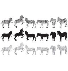 Set of zebra vector image vector image