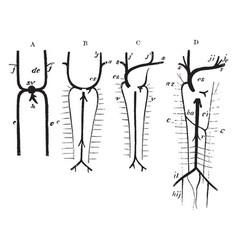 Development of great veins vintage vector