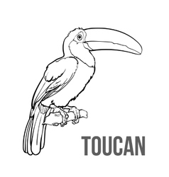 Hand drawn toucan seating on a tree branch vector