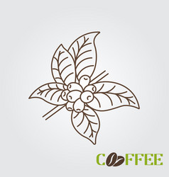 line icon coffee plant with leaf and beans vector image
