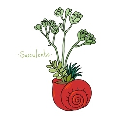 Beautiful succulent plants in a shell vector