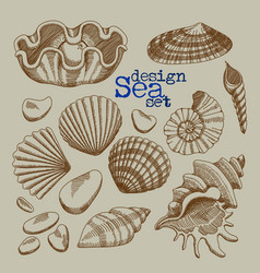 A set of sea shells vector