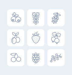 berries icons set in linear style on white vector image