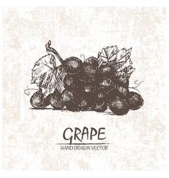 digital detailed grape hand drawn vector image vector image