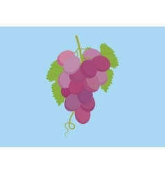 grape violet isolated with green leaf and blue vector image vector image
