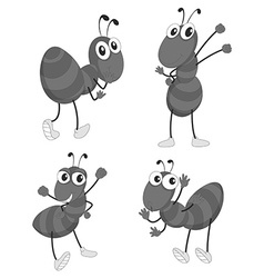 Different poses of ants vector image