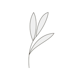 Branch of plant vector image vector image